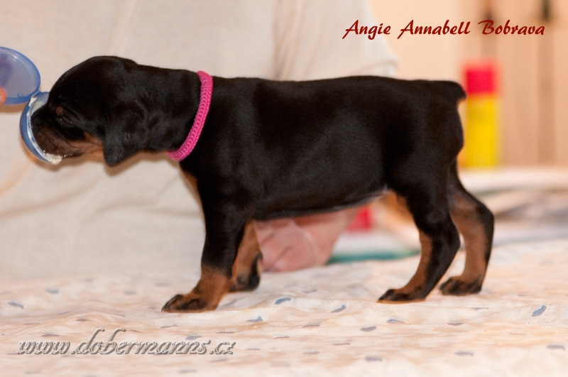 Angie Annabell Bobrava (4 weeks)